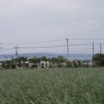 土地から見える景色です。