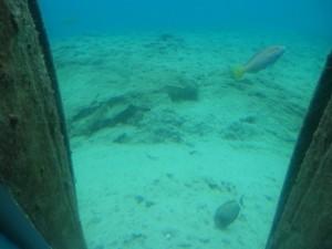 宮古島の海中水族館の画像